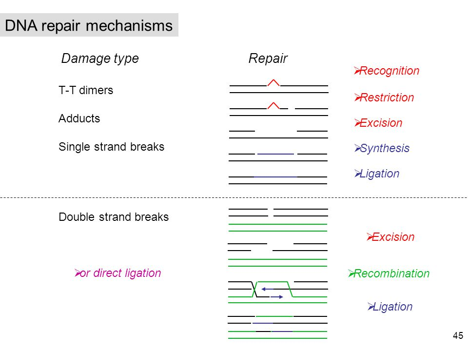 DNA repair mechanisms Damage type Repair Recognition T-T dimers
