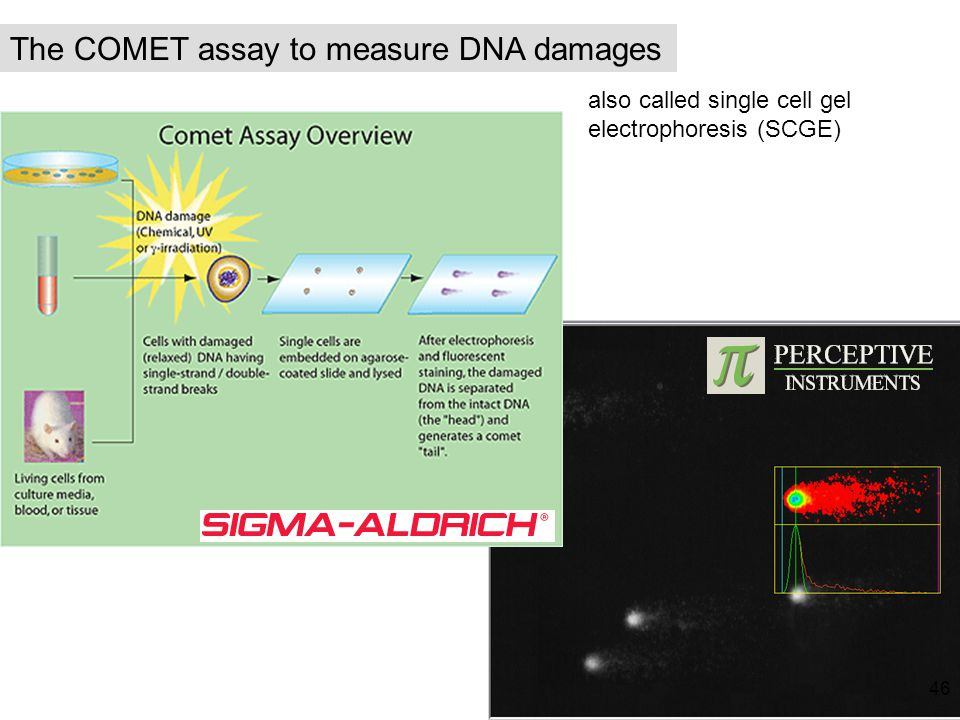 The COMET assay to measure DNA damages