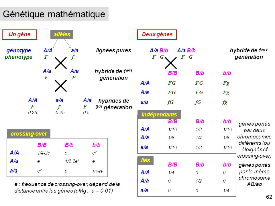 Génétique mathématique