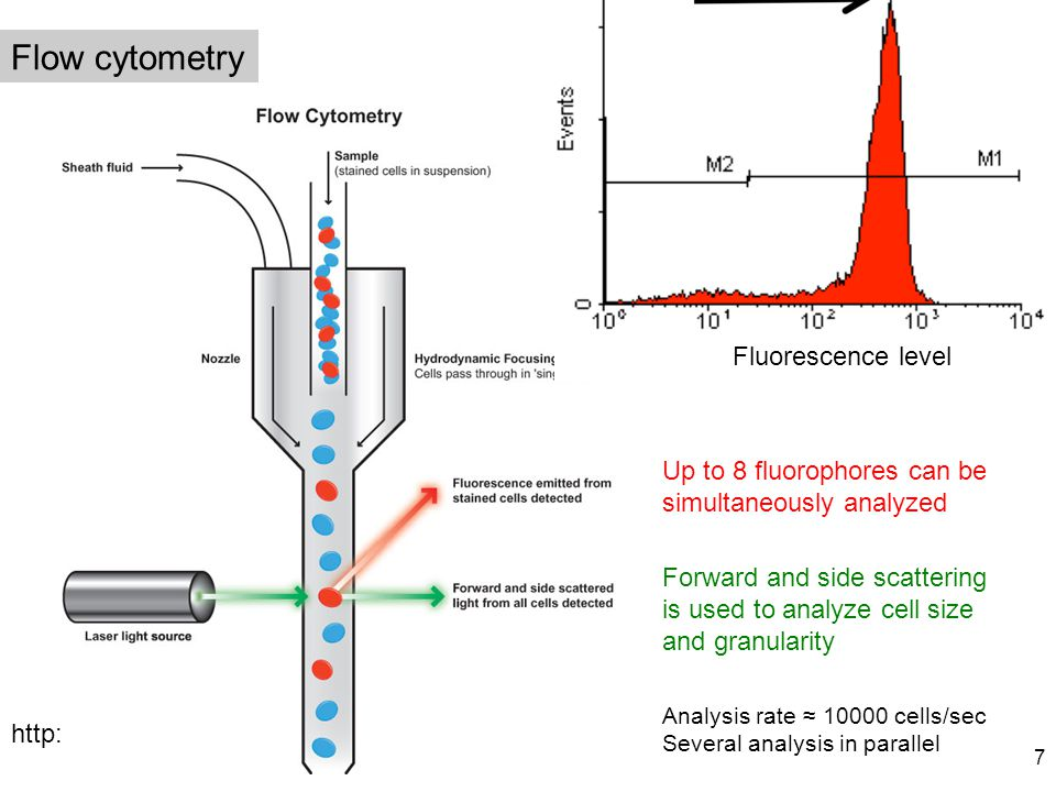 Flow cytometry Fluorescence level