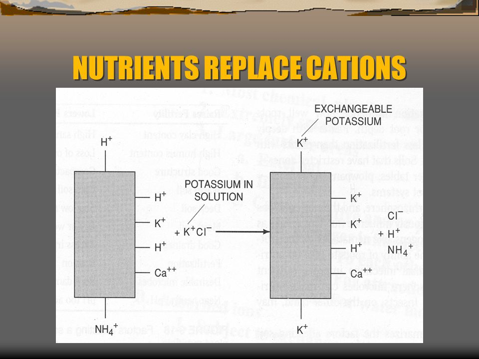 NUTRIENTS REPLACE CATIONS