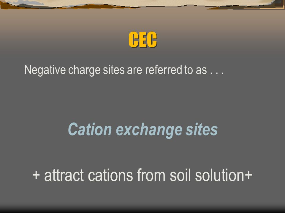 + attract cations from soil solution+