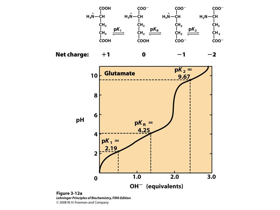 FIGURE 3-12a Titration curves for (a) glutamate and (b) histidine