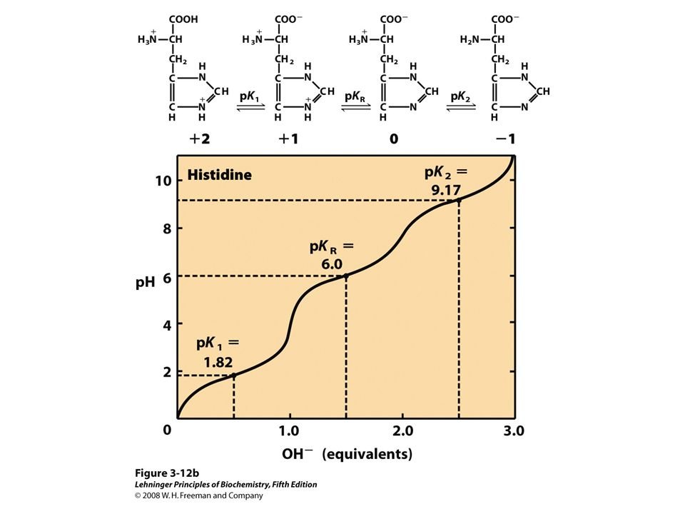 FIGURE 3-12b Titration curves for (a) glutamate and (b) histidine