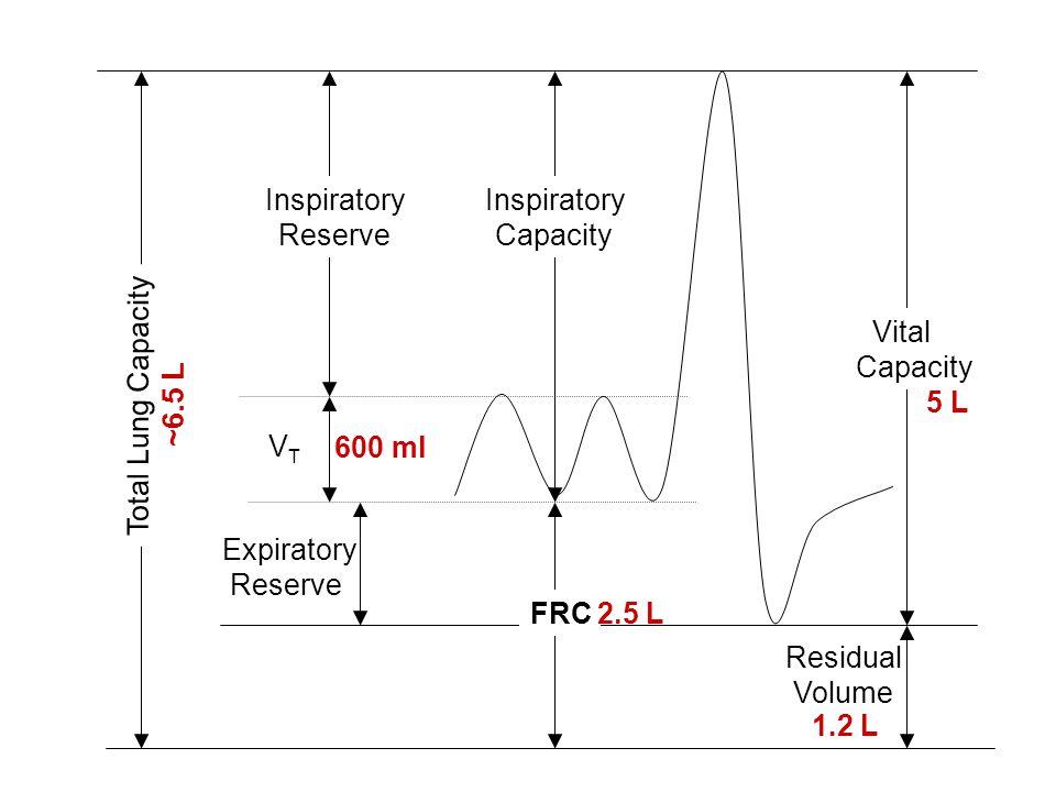 Inspiratory Reserve. Inspiratory. Capacity. Vital. Capacity. Total Lung Capacity. ~6.5 L. 5 L.