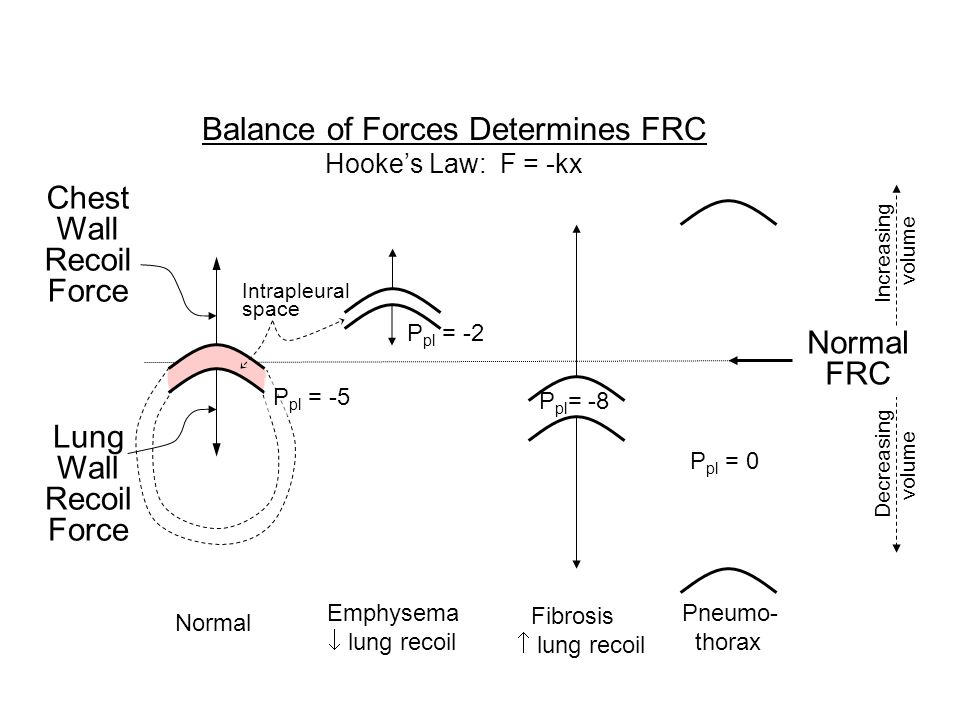 Balance of Forces Determines FRC