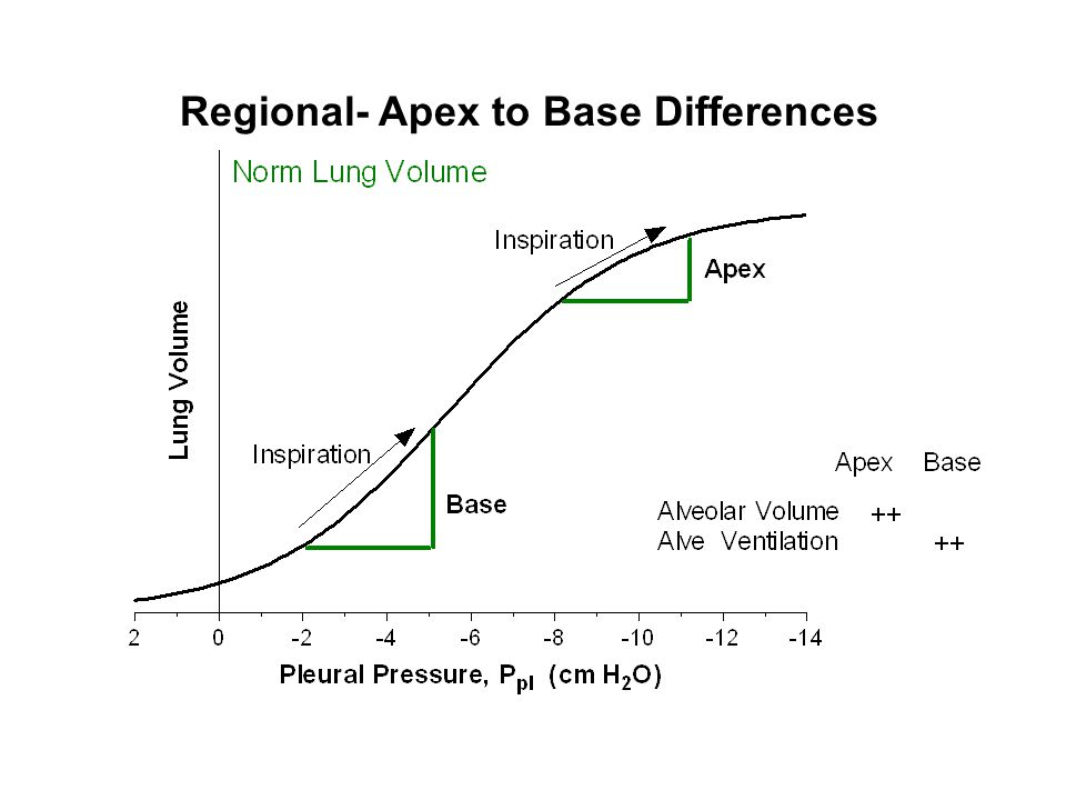 Regional- Apex to Base Differences