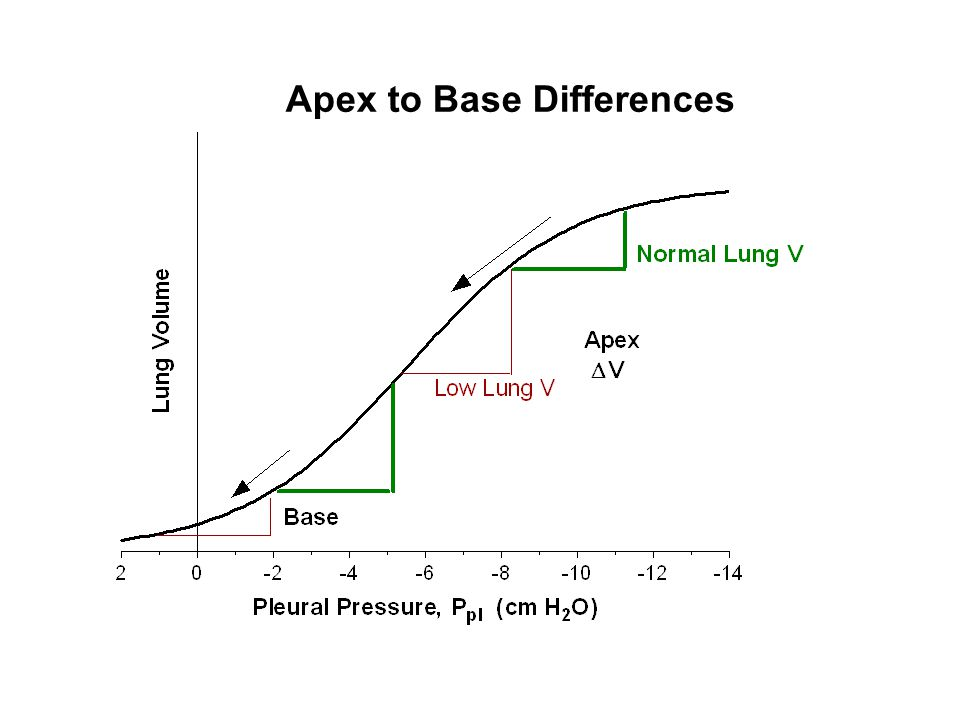 Apex to Base Differences