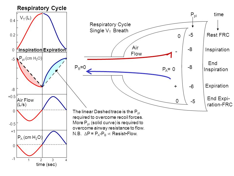 Respiratory Cycle - Ppl time Respiratory Cycle Single VT Breath -5