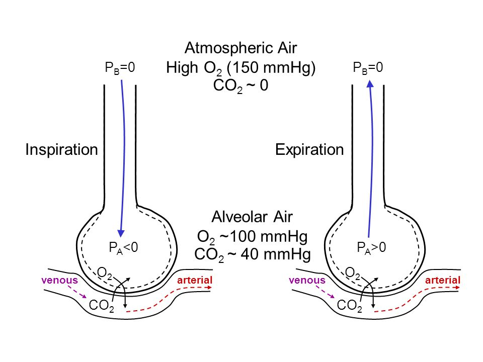 Atmospheric Air High O2 (150 mmHg) CO2 ~ 0 Inspiration Expiration