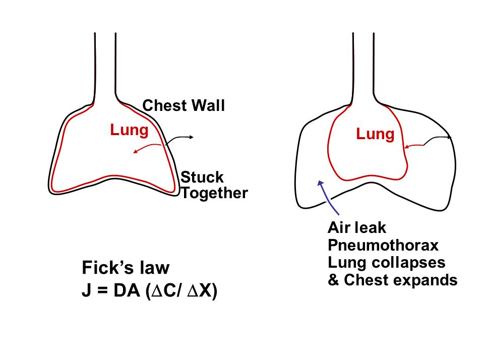 Fick's law J = DA (C/ X) Chest Wall Lung Lung Stuck Together