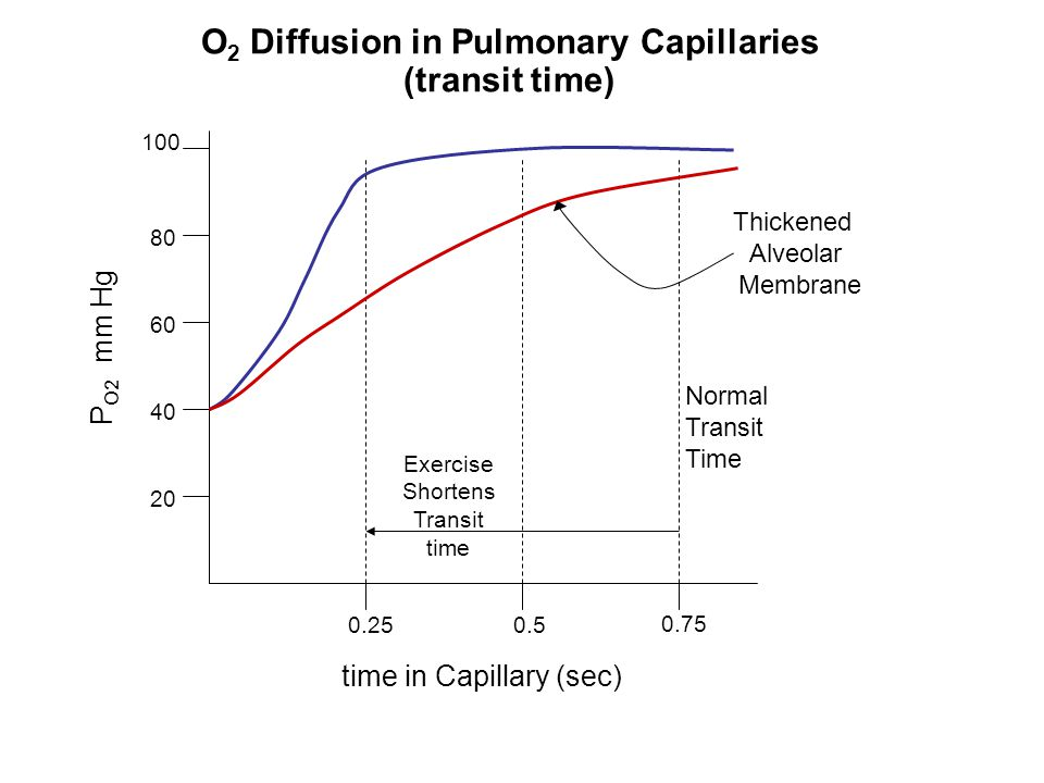 O2 Diffusion in Pulmonary Capillaries