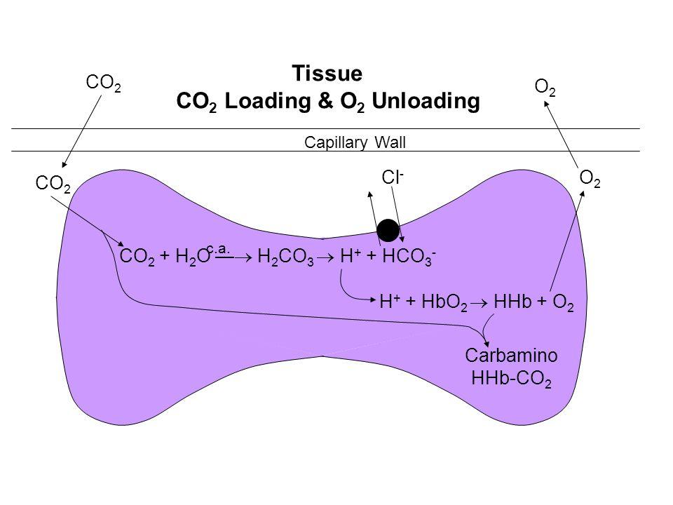 CO2 Loading & O2 Unloading
