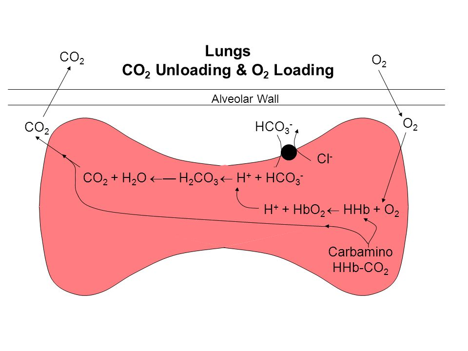 CO2 Unloading & O2 Loading