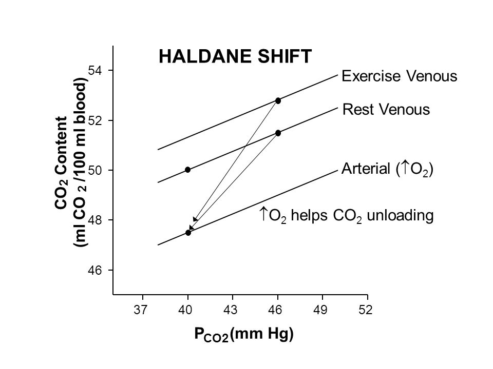HALDANE SHIFT Rest Venous P (mm Hg) CO Content (ml CO /100 ml blood)