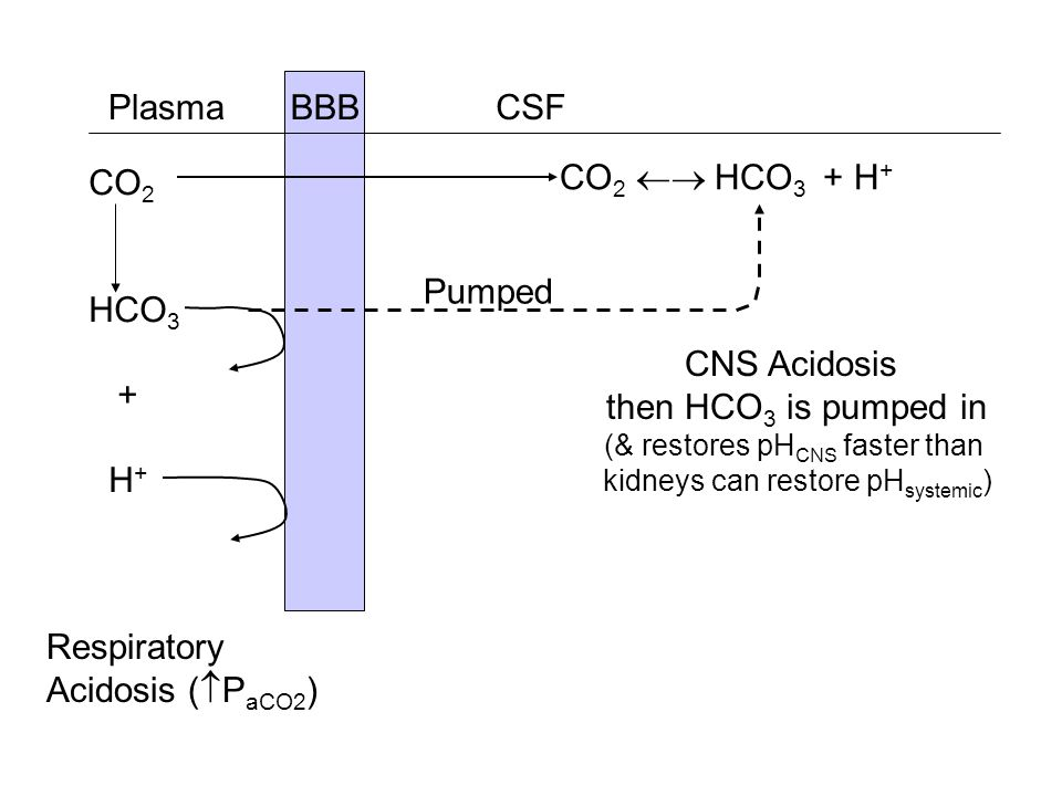 Plasma BBB CSF CO2 HCO3 + H+ CO2  HCO3 + H+ Pumped CNS Acidosis