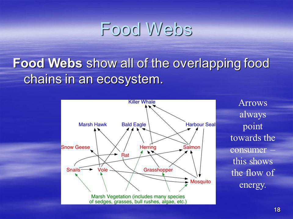 Food Webs Food Webs show all of the overlapping food chains in an ecosystem.