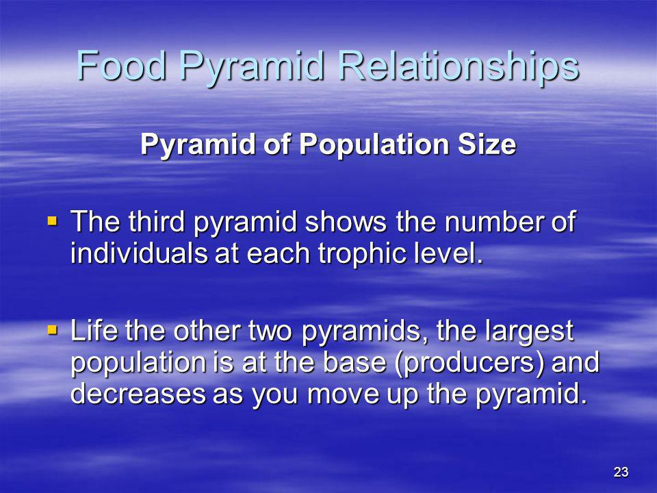 Food Pyramid Relationships