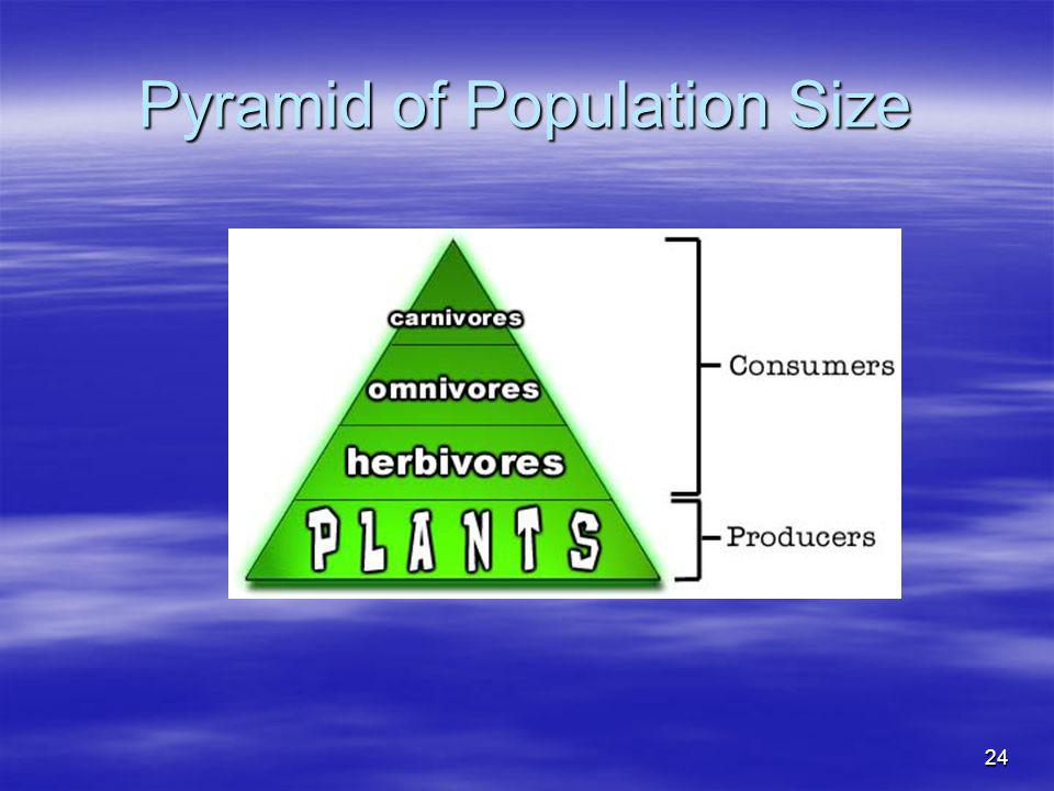 Pyramid of Population Size