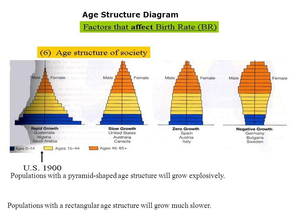 Age Structure Diagram Generally, human populations in the developed world are rectangular and those of developing nations are pyramidal.