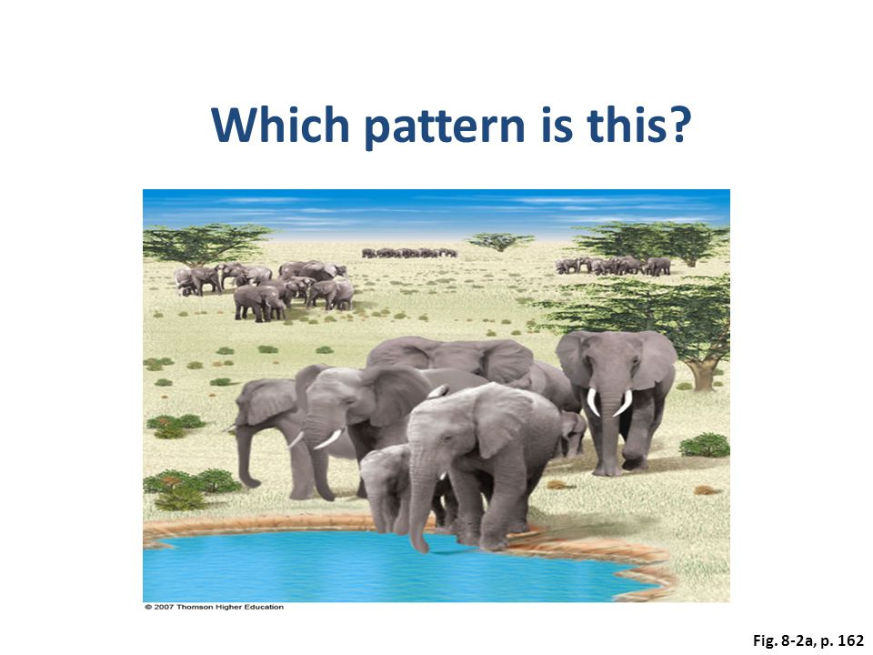 Which pattern is this Fig. 8-2a, p. 162