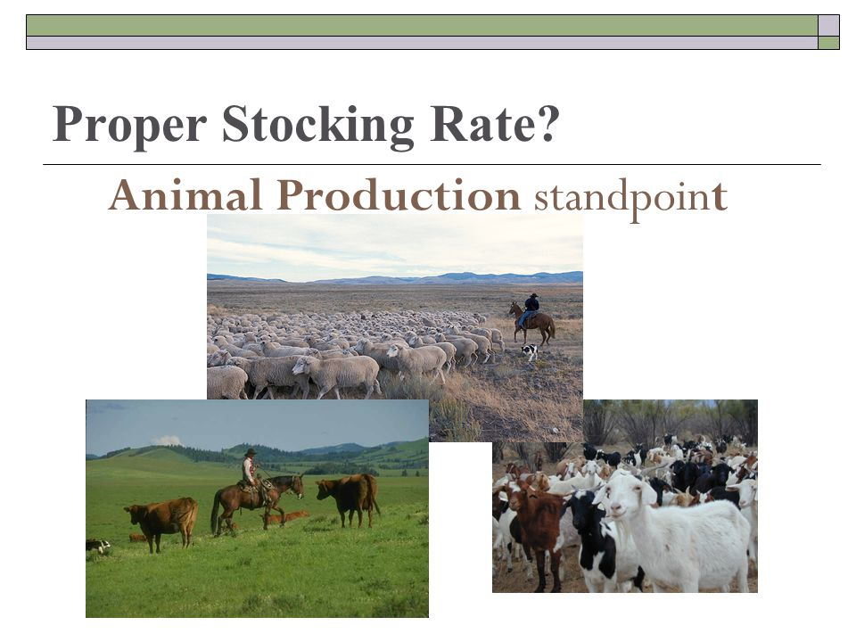 Proper Stocking Rate Animal Production standpoint