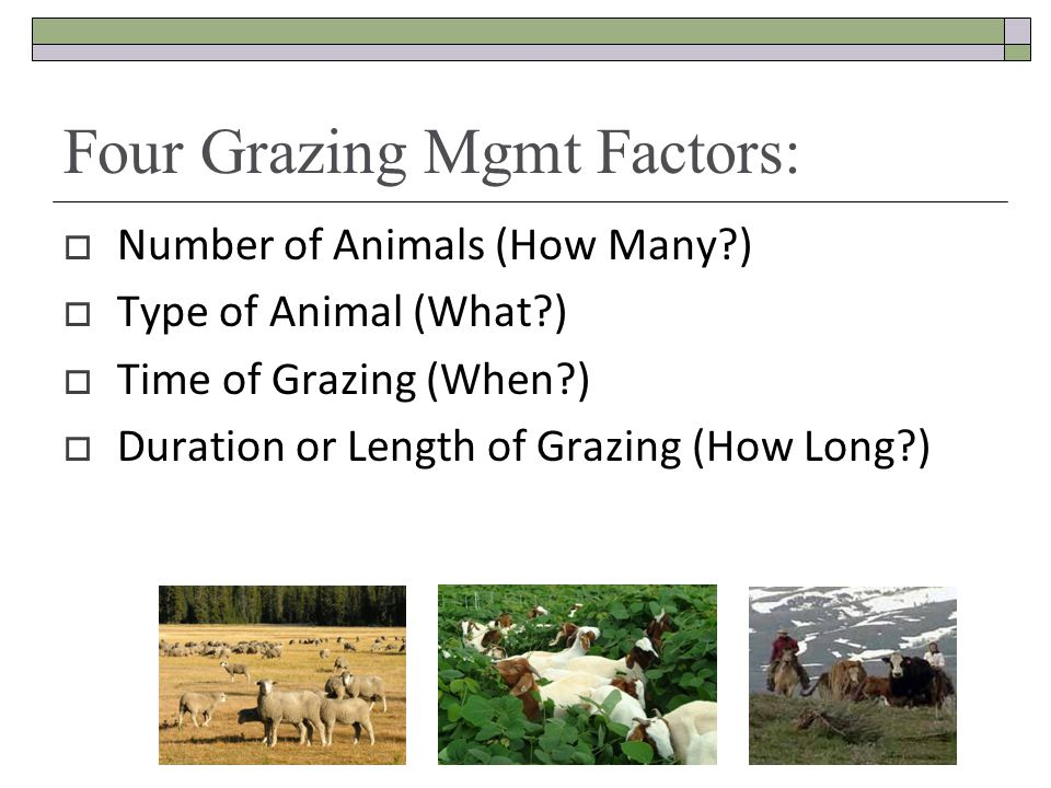 Four Grazing Mgmt Factors: