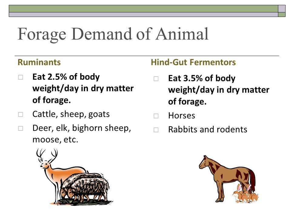 Forage Demand of Animal