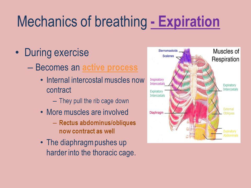 Mechanics of breathing - Expiration