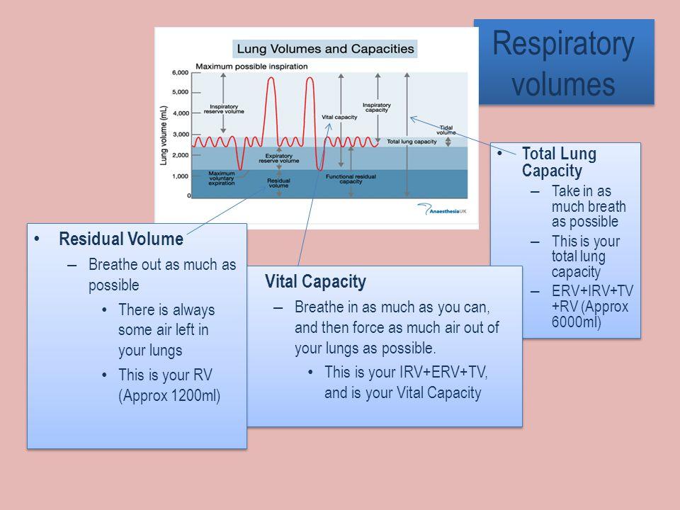 Respiratory volumes Residual Volume Vital Capacity Total Lung Capacity