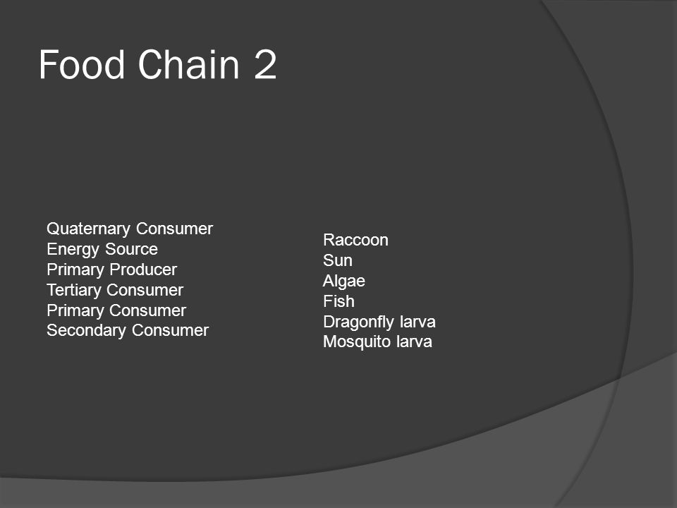 Food Chain 2 Quaternary Consumer Energy Source Raccoon