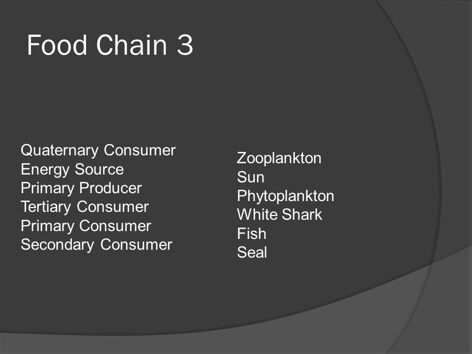 Food Chain 3 Quaternary Consumer Energy Source Zooplankton Sun
