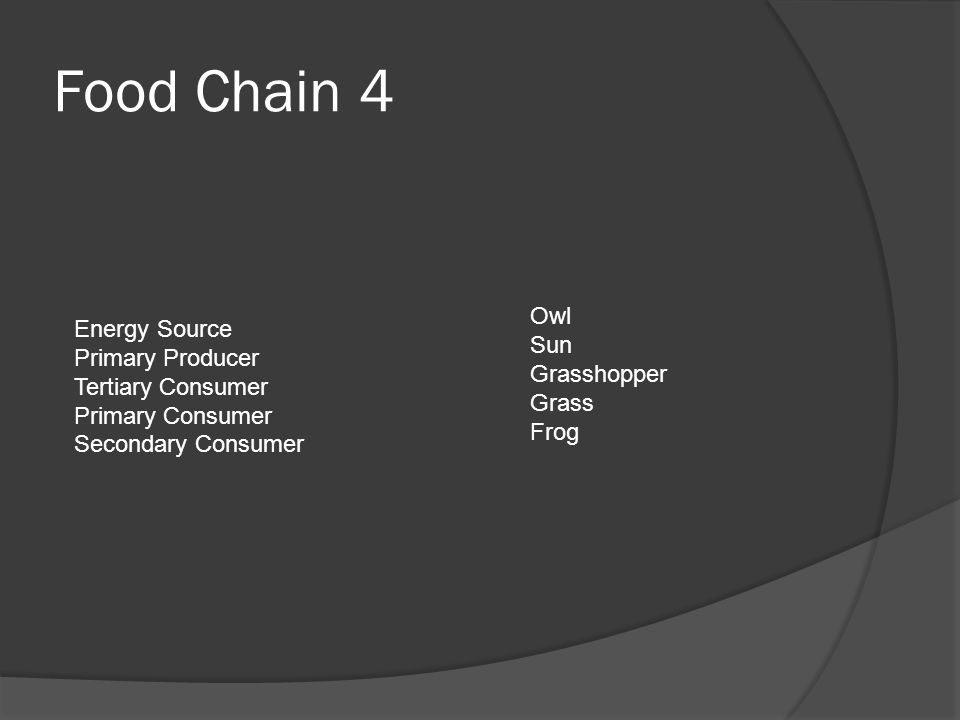 Food Chain 4 Energy Source Owl Primary Producer Sun Tertiary Consumer