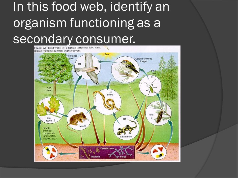 In this food web, identify an organism functioning as a secondary consumer.
