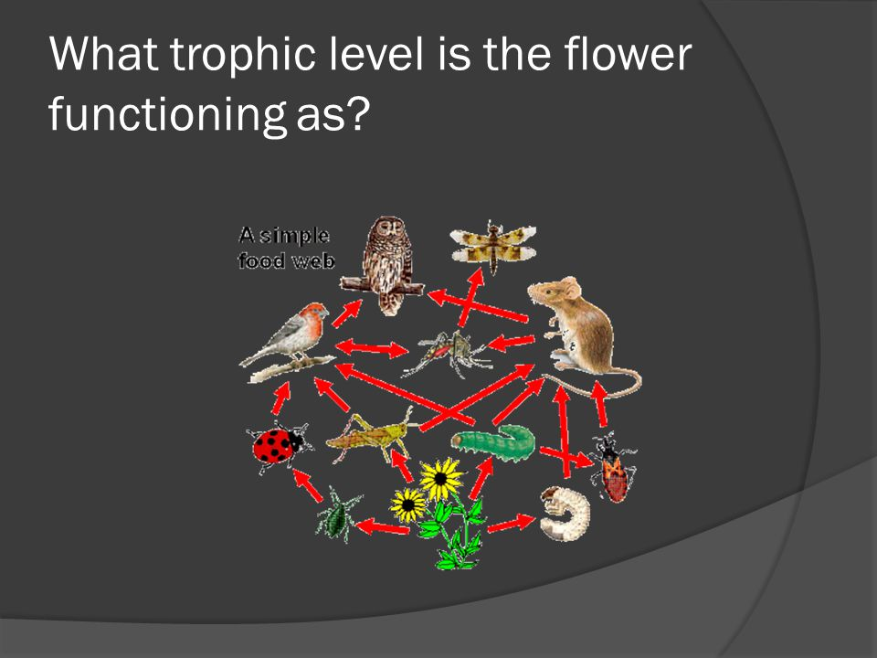 What trophic level is the flower functioning as