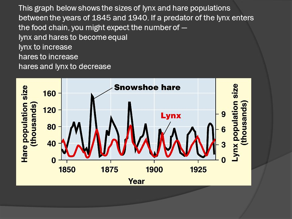 This graph below shows the sizes of lynx and hare populations between the years of 1845 and 1940.