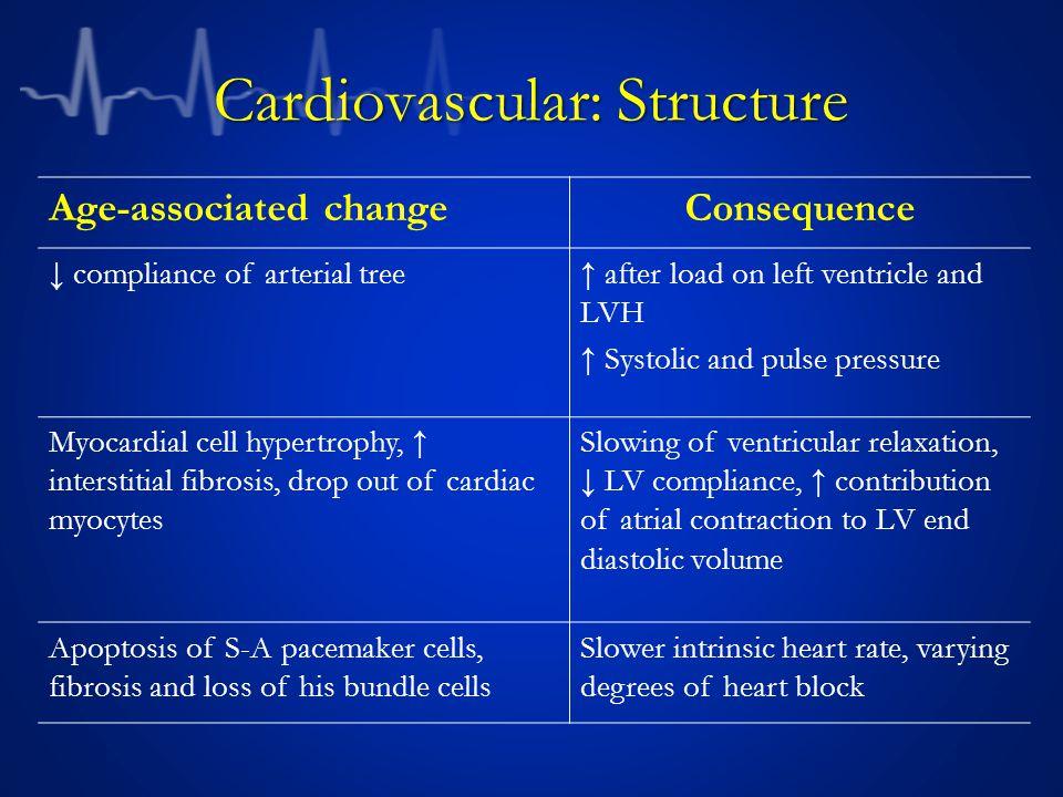 Cardiovascular: Structure