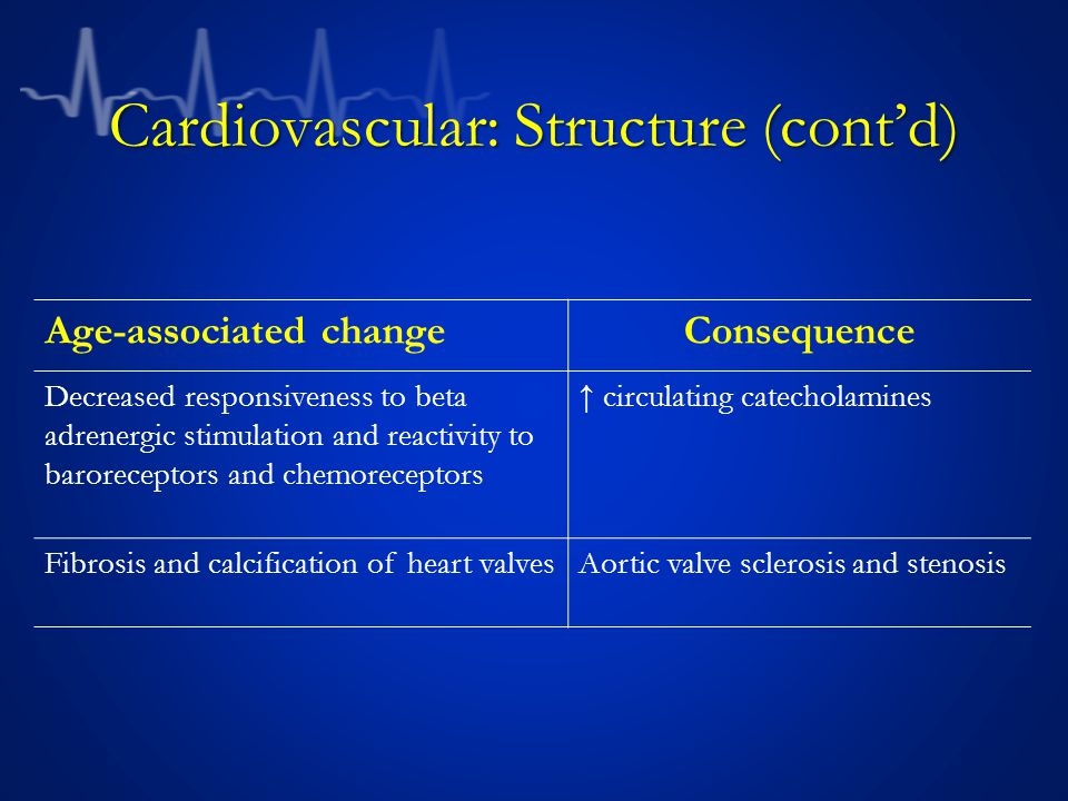 Cardiovascular: Structure (cont'd)