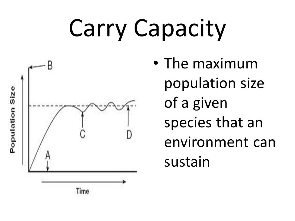 Carry Capacity The maximum population size of a given species that an environment can sustain