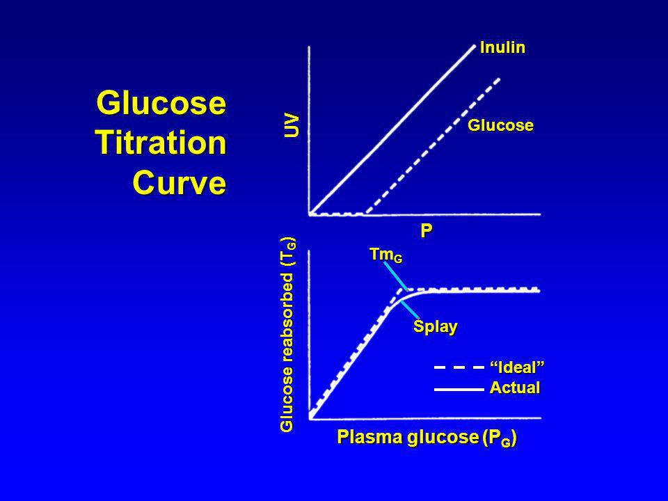 Glucose Titration Curve UV P Plasma glucose (PG) Inulin Glucose TmG