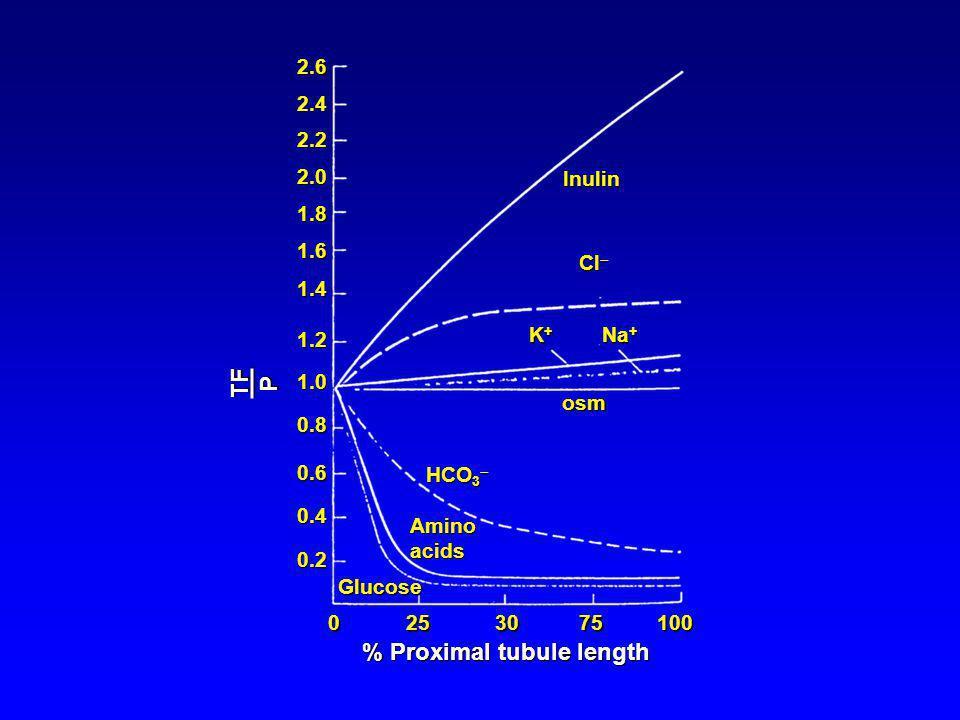 % Proximal tubule length