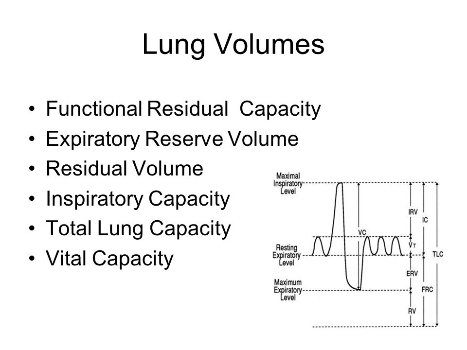 Lung Volumes Functional Residual Capacity Expiratory Reserve Volume