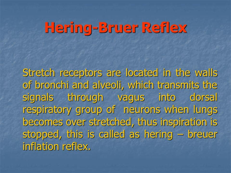Hering-Bruer Reflex
