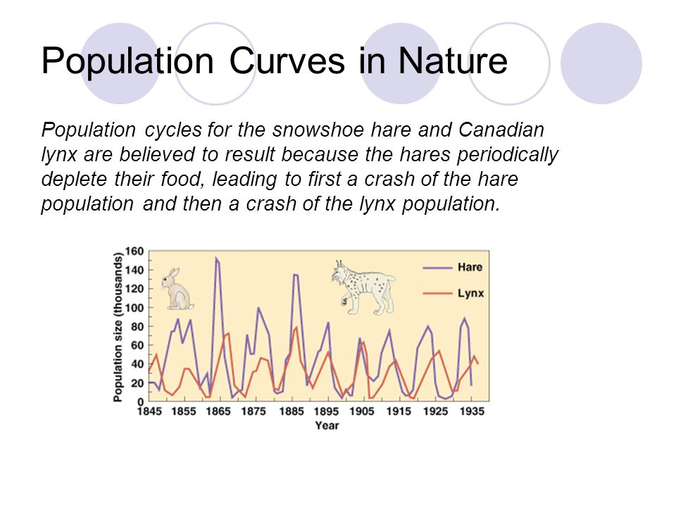 Population Curves in Nature