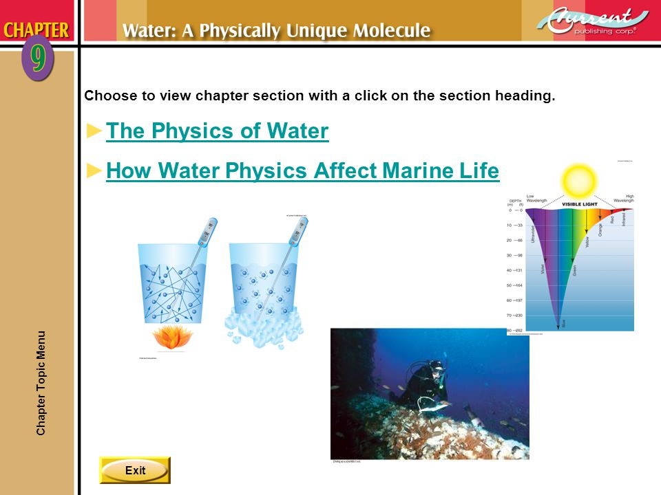 How Water Physics Affect Marine Life