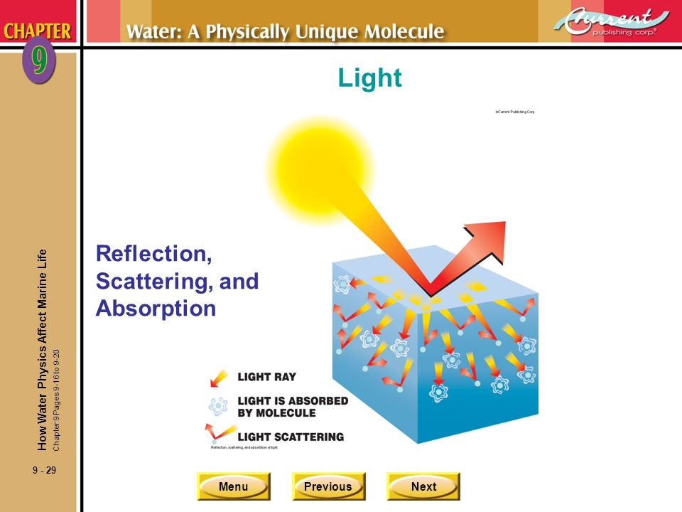 Light Reflection, Scattering, and Absorption