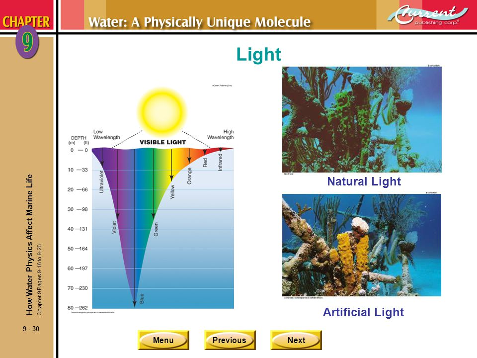 Light Natural Light Artificial Light