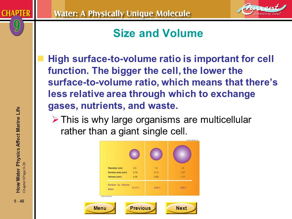 Size and Volume