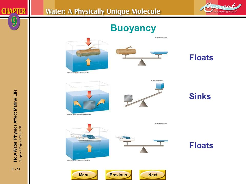 Buoyancy Floats Sinks Floats How Water Physics Affect Marine Life