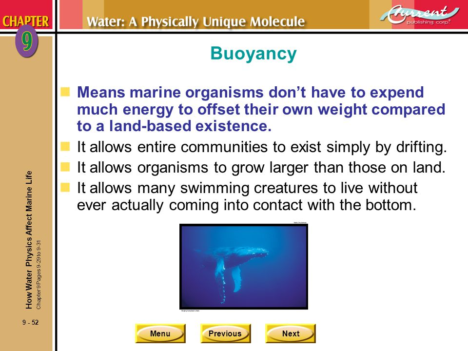 Buoyancy Means marine organisms don't have to expend much energy to offset their own weight compared to a land-based existence.